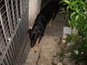 0 - cachorra Magali - Casa Josepha, São Caetano do Sul
