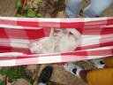 0 - gato Mick, rede - Casa Josepha, São Caetano do Sul