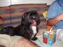 0 - cachorra Rebecca(2) - Casa Josepha, São Caetano do Sul