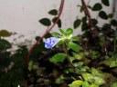 0 - flor roxa jardim - Casa Josepha, São Caetano do Sul