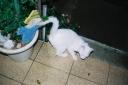 0 - gato Mick - Casa Josepha, São Caetano do Sul