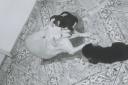0 - P&B, cachorros, Branquinha e filhotes Gisma - Casa Max, Sao Caetano do Sul