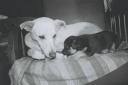 0 - P&B, cachorros, Branquinha e filhote Gisma - Casa Max, Sao Caetano do Sul