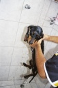 0 - cachorra Meg - Casa Junior, Sao Paulo
