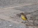 0 - pássaros - Camping Cabreúva, Cabreúva