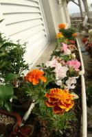 0 - flores, floreira, jardineira - Apartamento Max, São Caetano do Sul