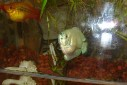 - peixes aquário Josepha - Casa Josepha, São Caetano do Sul