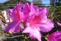 - flores - Capivari, Campos do Jordão