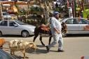 DESC, - cabra, jumento - Capivari, Campos do Jordão