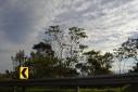 - árvores à beira da estrada - Gol Vermelho, Rodovia Ayrton Senna