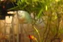 - peixes, aquário - Casa Josepha, São Caetano do Sul
