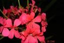- flores - Casa Josepha, São Caetano do Sul