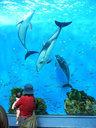 - golfinhos, peixes - Aquário, Japão