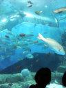 - peixes - Aquário, Japão