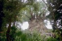 -  - Disney`s Animal Kingdom, Orlando